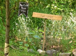 rain garden in Grand Island