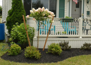 left side of porch after landscaping by Busy Beaver Lawn & Garden