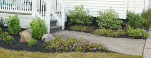 garden to right of porch after Busy Beaver installation