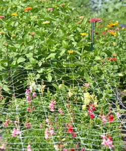 zinnias and other flowers growing outside at Mischler's