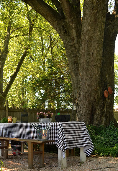 farm table under large tree