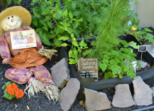 suitcase garden in Western New York