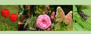 montage for early autumn
