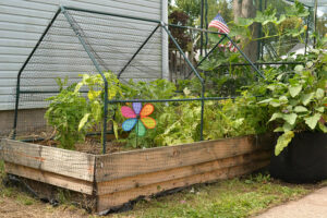raised bed covered in bird netting
