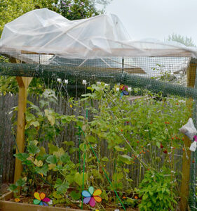 plastic sheeting is roof of raised garden bed