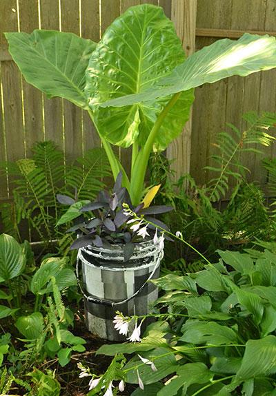 paint can as pot in garden