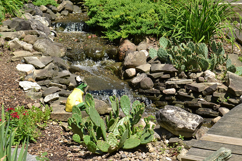 prickly pear cactus and waterfall