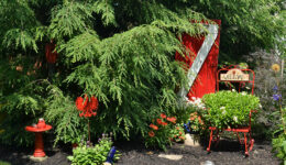 red door in garden
