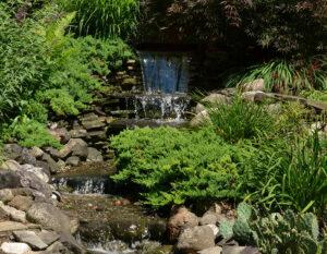 top of waterfall in backyard
