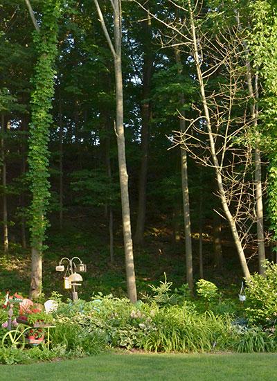 Niagara escarpment behind garden