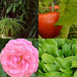 images representing topics of horticulture classes