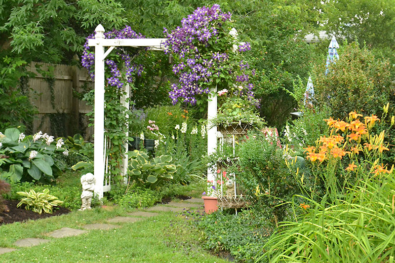trellis from front