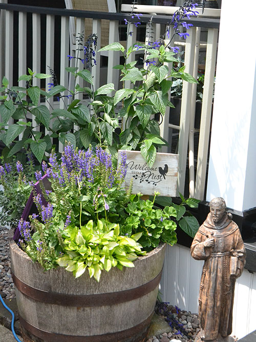 container with perennials