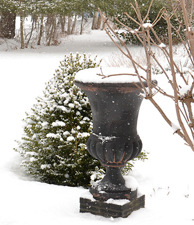 urn and boxwood in snow