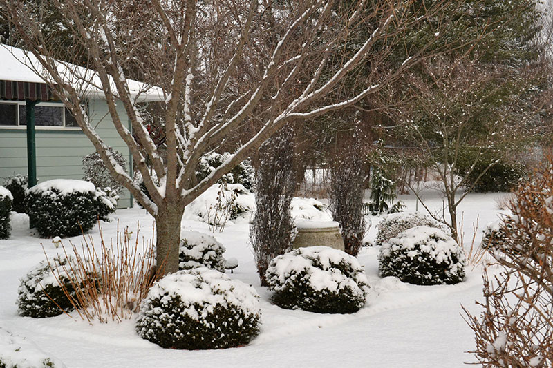 middle bed in four-season garden