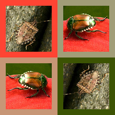 insects in colored squares