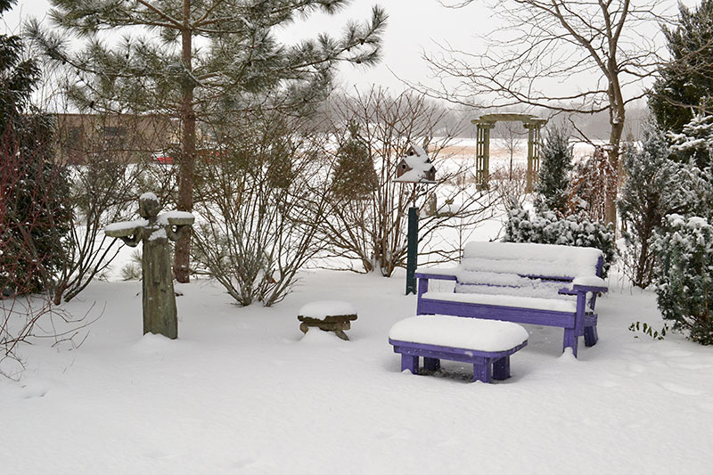 purple bench in snow