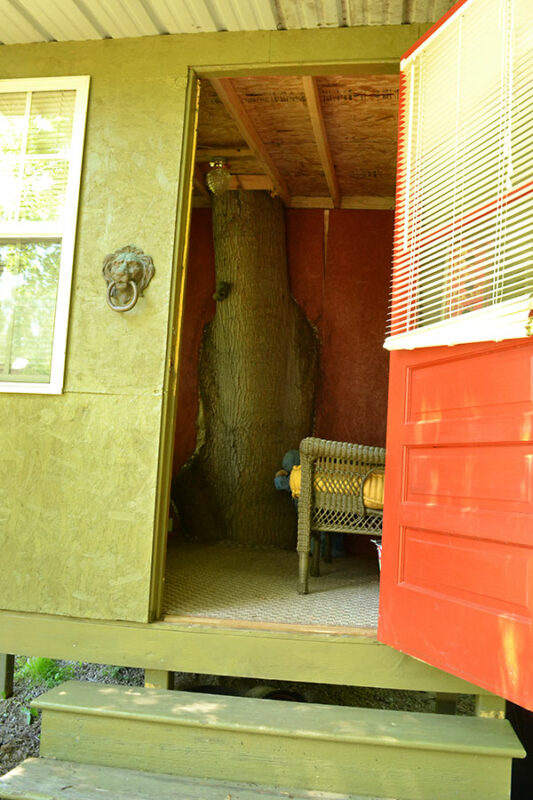 garden room with tree trunk in wall