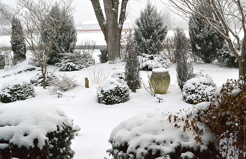 overall garden in snow by Connie Oswald Stofko