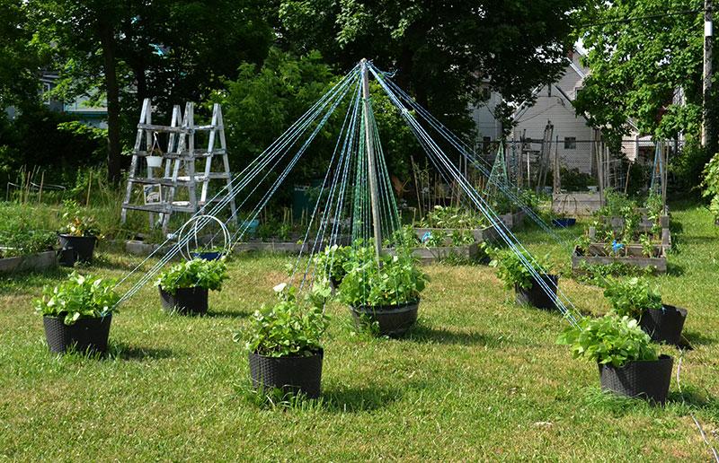 maypole trellis on East Side Garden Walk in Buffalo