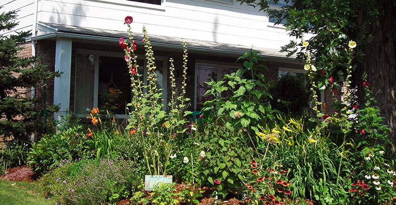 tall perennials provide privacy in Amherst NY