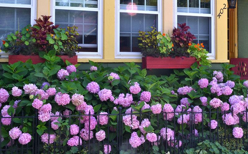 flowers on Garden Walk Buffalo