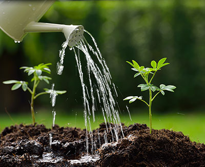 watering can with plants in garden