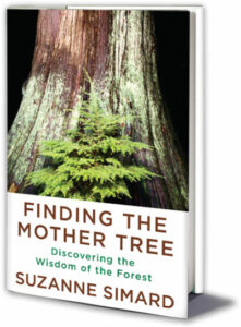 cover of book Finding the Mother Tree