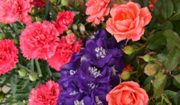 coral roses with pink dianthus and purple delphinium