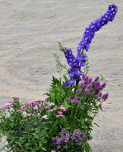 perennials with unbalanced heights