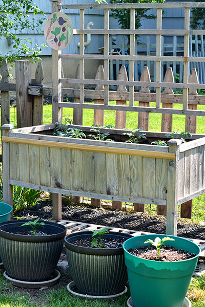 raised garden in Lewiston NY