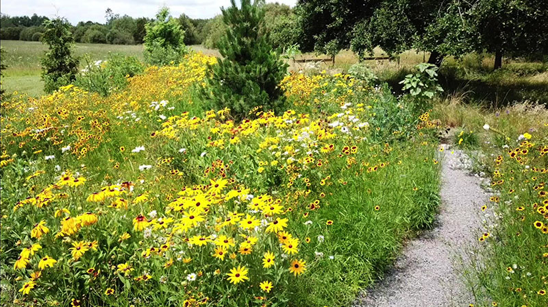 meadow with native plants in Western New York