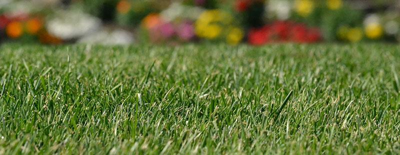 lawn at Lakeside Sod