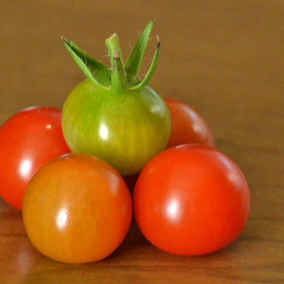ripe and unripe cherry tomatoes in Buffalo NY by Stofko