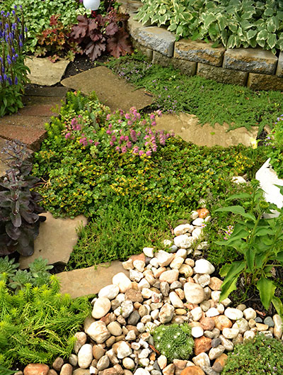 ground covers in garden in Kenmore NY